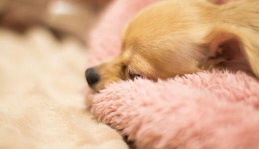 子犬の睡眠時間は18時間以上必要と言われています。