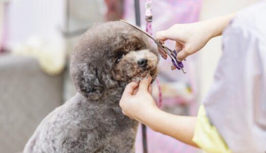 アサヒペットで初めてのお手入れ。子犬の爪切りや部分カットについて。