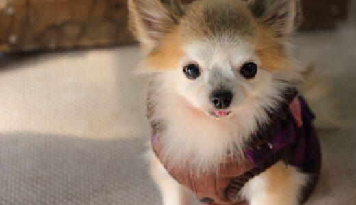 子犬が震えるのは病気の時だけではありません。