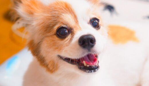 子犬のしつけ・パピースクール~第3回目の内容~ブラッシングのやり方。