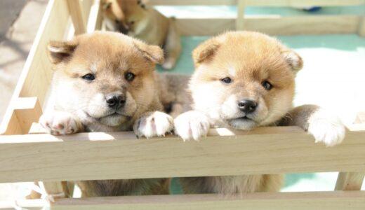 【横浜市】子犬の幼稚園・アサヒペットの「こいぬのようちえん」に入れてみた感想。